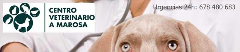 Veterinaria asistencial de Gato Pirata que ofrece promociones y descuentos a nuestros socios, además de colaborar en diferentes campañas como el banco de alimentos. Consultar en su clínica las ofertas vigentes.