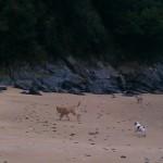 Lost ya casi recuperado jugando en la playa