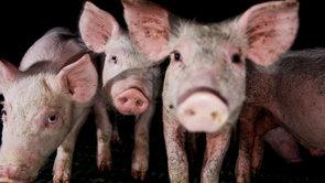imagen vídeo documental Igualdad ANIMAL