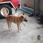 Atado Corto, durmiendo directamente sobre cemento y sin atención veterinaria.