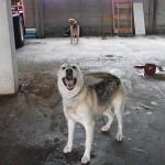 Atado a columna,durmiendo directamente sobre cemento y sin atención veterinaria.