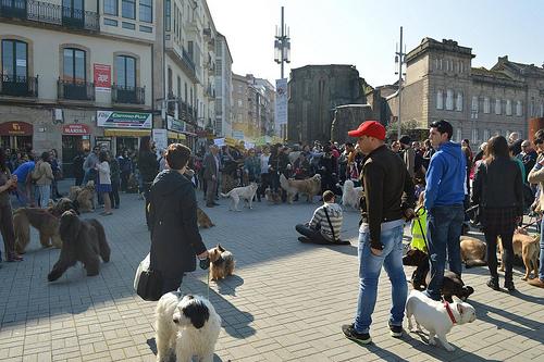 Concentración canina reinvindicativa Pontevedra